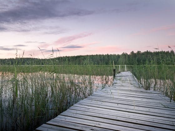 Wooden dock in a marsh at sunset